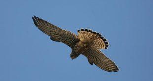 observação de aves Praia do norte