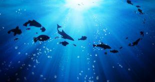 oceano fundo peixes