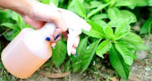 Inseticida-natural-para-jardim-e-horta-pesticida agricultura