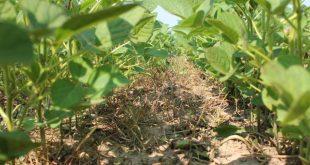 agricultura ervas