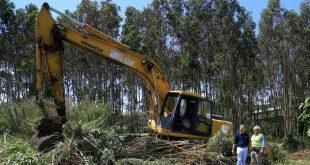 agricultura limpeza floresta