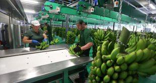 banana Inauguração Instalações GESBA8