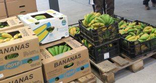 bananas açores 01