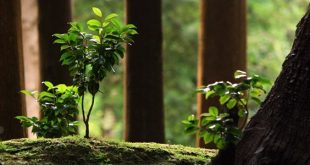 floresta ambiente certificada
