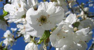 frutos em flor