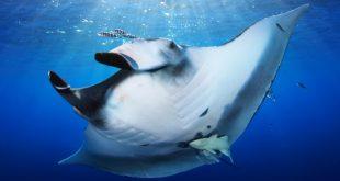 oceanario raia 8_ocnr_fundo_site_news_619_1-02