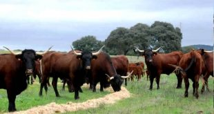 touros 09