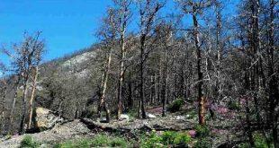 floresta incendios 09