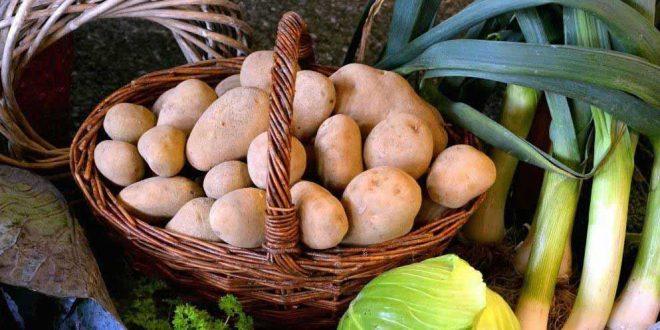 legumes batata 2017-05-18-11-50-32