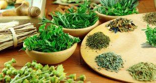 plantas medicinais aromaticas 05