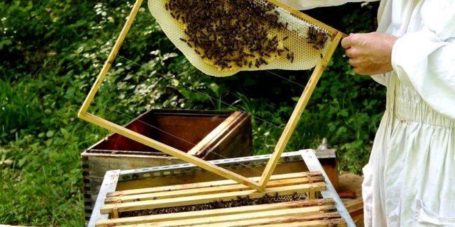 abelhas mel apicultura 10 - DGAV realiza tres acciones de formación de apicultura - El Apicultor Español: Actitud y Aptitud Apícola